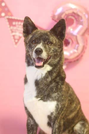 Smiling dog celebrating birthday