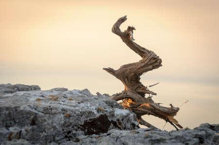 deadwood: Deadwood on rocks, dried wood that once was a tree Stock Photo