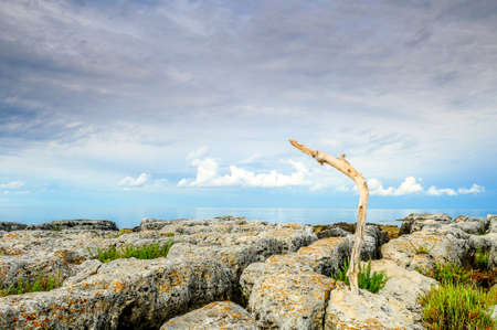 deadwood: Deadwood washed ashore and stayed in awkward position trapped in the rocks Stock Photo