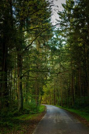 poner atencion: Un camino a trav�s de un bosque, prestar atenci�n al �rbol cubierto de musgo