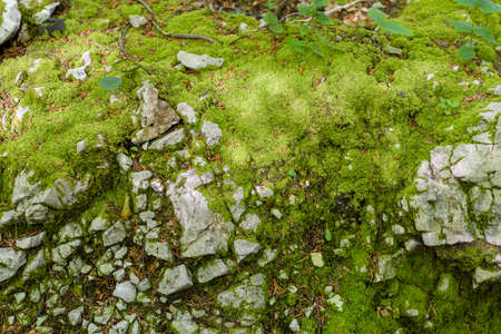 Moss and Stones in woods, greenery, color of the year