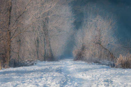 Footpath, road leading among frosted trees on a sunny winter morning
