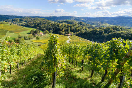 Famous Heart shaped wine road in Slovenia, vineyard near Maribor Imagens