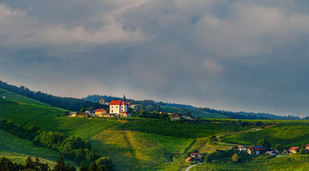 Vineyards with small village in Ritoznoj, Slovenia, small Christian church on top of the hill, surrounded with rows of grape vine, traditional winery on Pohorje wine road