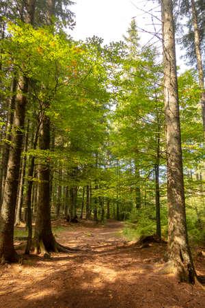 Trail through forest in Black lake, Crno jezero natural reserve, Slovenia on Pohorje mountain, popular hiking destination