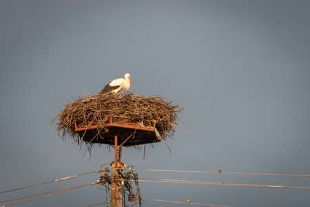 Stork in nest on power line pole, a sparrow sitting on wires