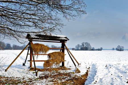 Wooden wildlife feeder in snow winter landscape, hay stacked for deer