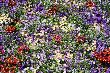 Colorful flower bed in spring, hundreds of flowers
