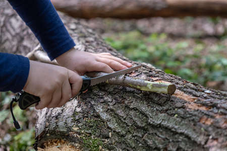 Hands of little girl or boy using a Swiss knife, sawing a piece of wood in the forest, outdoor survival and camping, fun in the woods, nobody