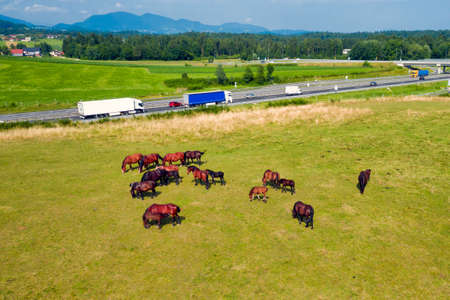 Horses grazing in a meadow next to a river. Country landscape. View from above, new and old horsepower