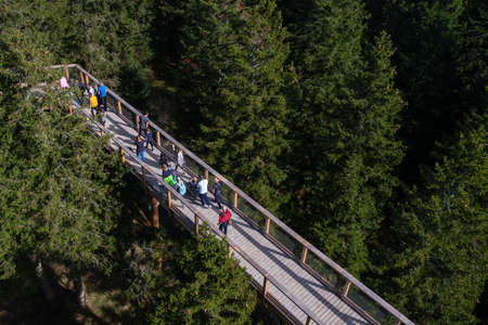Tree canopy walk, treetop walkway, footbridge through the forest, adventure in nature, escaping the city on Rogla, Pohorja mountain, Slovenia Zdjęcie Seryjne