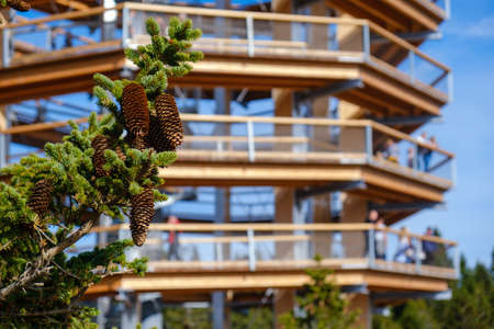 Forest canopy tower and walkway, footpath above treetops, outdoor adventure on Rogla, Slovenia