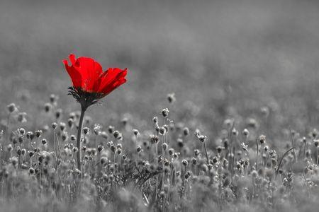 red romance photo