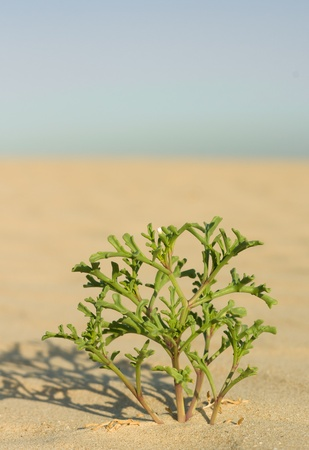 single plant growing in the desert photo
