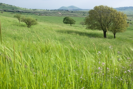 israel agriculture: spring vegetation in the Golan heights, northern Israel  Stock Photo