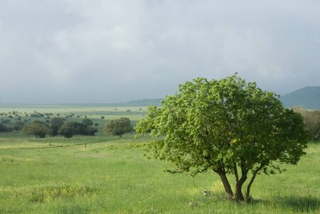 the golan heights: green field in the Golan heights - northern Israel