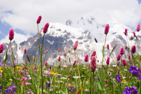 spring blossom at the high caucasus mountains - Svaneti, Georgia  photo