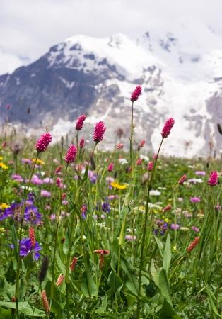 spring blossom at the high caucasus mountains - Svaneti, Georgia  photo