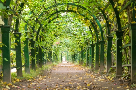natural arch: a garden tunnel in Peterhof palace, St Petersburg, Russia