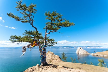 The Tree of desires on Olkhon Island, Lake Baikal, Russia photo