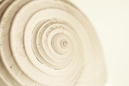 달팽이 조개의 closup입니다