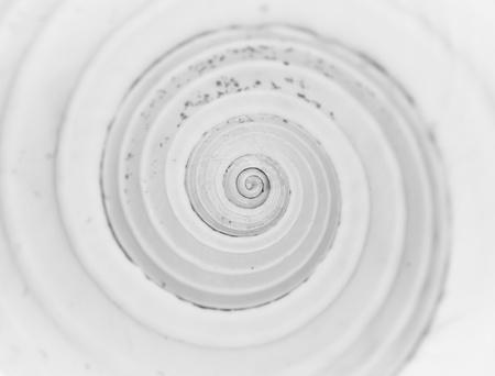 fibonacci number: a closup of a snail seashell Stock Photo