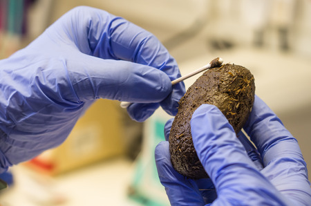 feces: DNA sampling from animal feces - wildlife research and conservation