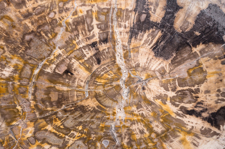 petrified fossil: petrified wood section abstract background - studio shot
