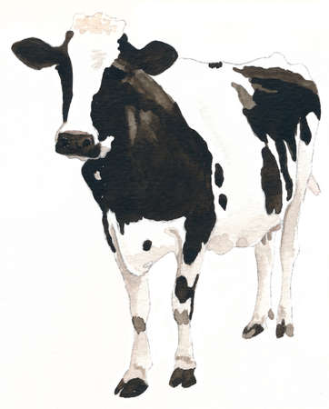 A black and white cow, watercolour, isolated Stockfoto