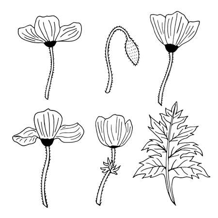 Set of black and white contour poppies, poppy Bud and leaf. Pack of monochrome outline flowers.