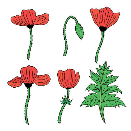 Set of colored poppies, poppy Bud and leaf. Pack of beautiful flowers for your design. Collection of red flowers.