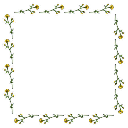 Square frame with horizontal yellow buttercup on white background. Isolated frame with flowers for your design.