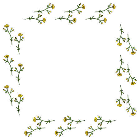 Square frame with horizontal vector buttercups on white background. Isolated frame with flowers for your design.