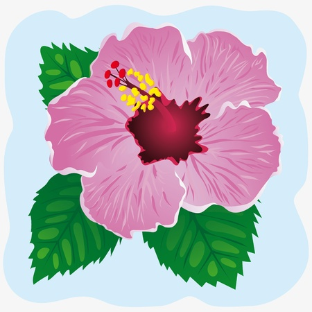 beautiful red hibiscus flower: Hibiscus on a blue background  Vector illustration