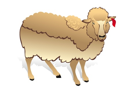 bleating: White sheep on white background