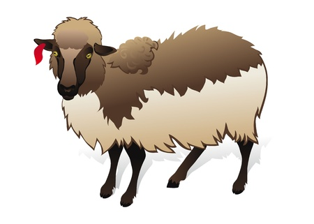bleating: Dark sheep on white background
