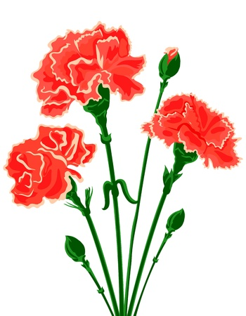 three colors: Vector bouquet of Carnations
