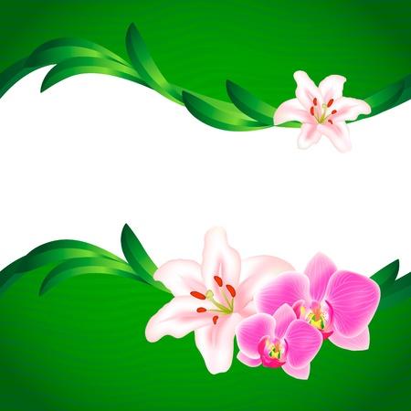 Mooie Lily en Orchid achtergrond Vector Illustratie