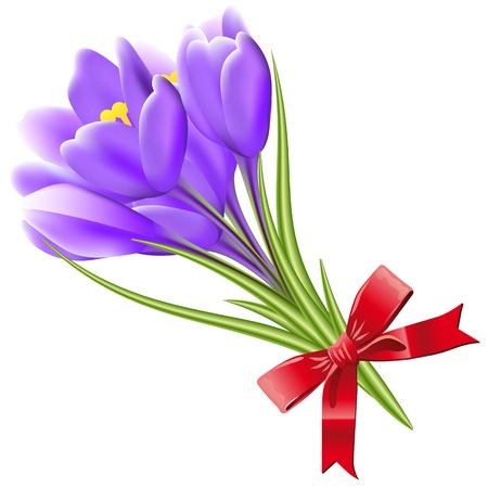 Frühlingsblumen auf weißem Hintergrund