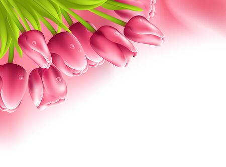Pink tulips and silk fabric isolated on white background Illustration