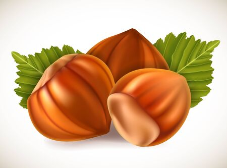 filberts: Filberts with leaves. Vector illustration.