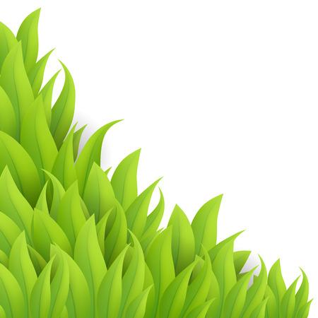 sedge: Green grass background, vector