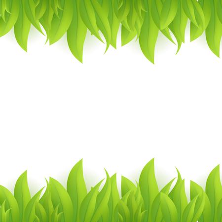 sedge: Green grass, vector