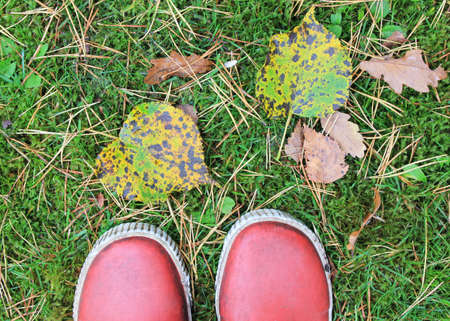 rainboots in autumn grass photo