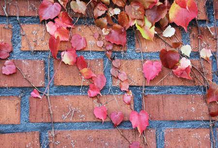 autumn leaves on brick photo