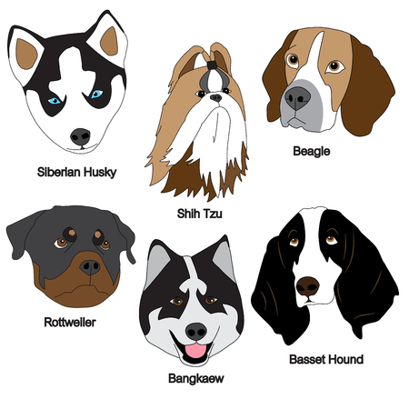 hound: Dog Face Set : Siberian Husky, Shih Tzu, Beagle, Rottweiler, Bangkaew, Basset Hound Vector Illustration Illustration