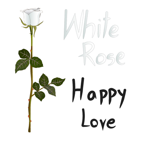 humility: White Rose Meaning isolated on White Background Vector Illustration Illustration