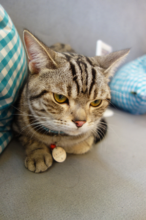 startled: Young Cat Looking