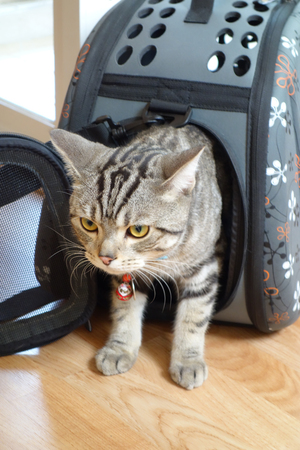 cat carrier: Cat Travel with Carrier Bag