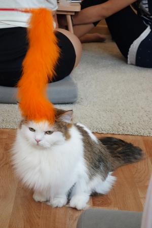 gato jugando: Gato juega con el juguete